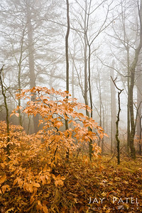 Great Somky Mountain National Park, Tennessee (TN), USA