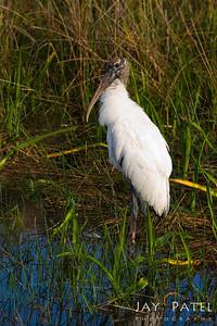 Everglades National Park, Florida (FL), USA