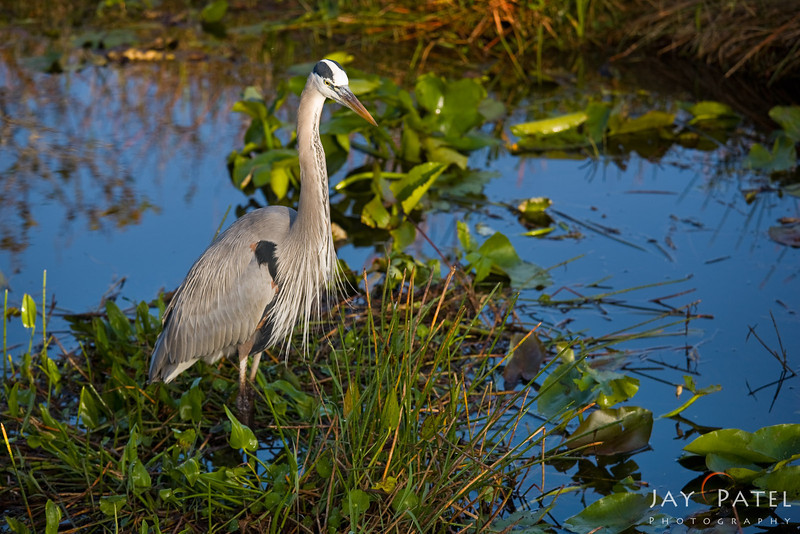 Everglades National Park, Florida (FL), USA