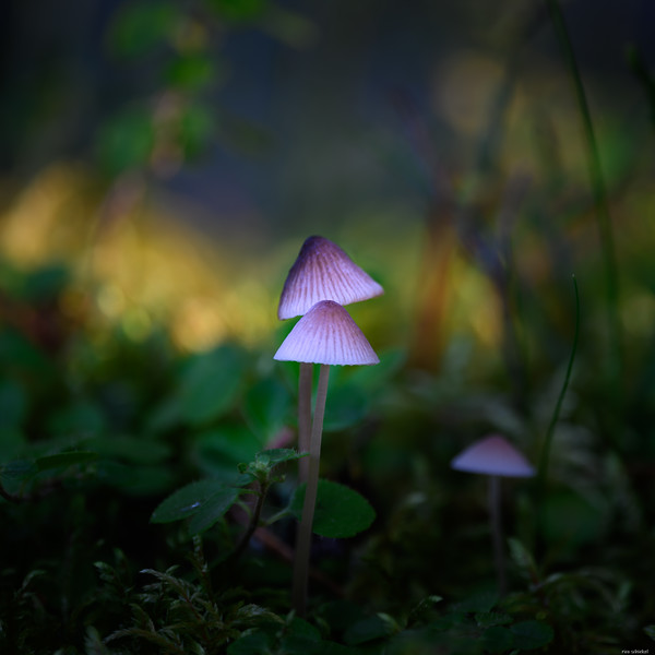 Magic glow