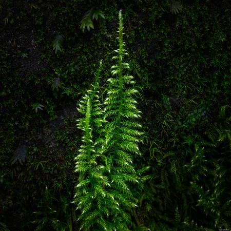 Very little tree