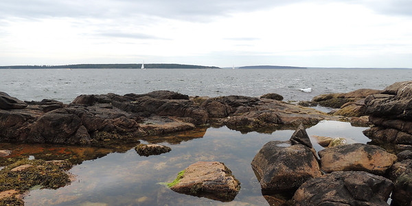 Ship Harbor Tide Pool | Acadia National Park