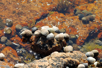 Seashells | Acadia National Park
