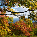Golden Autumn | Blue Ridge Parkway