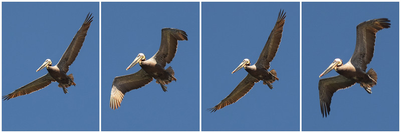 Bird | Channel Islands National Park