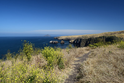 North Bluff Trail | Channel Islands National Park