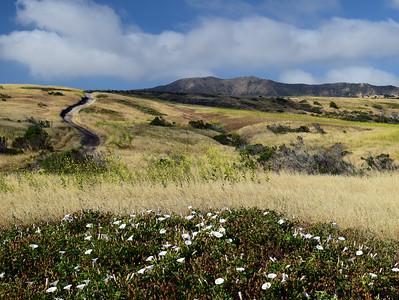 Smugglers Road | Channel Islands National Park
