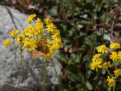 Butterfly | Guadalupe Mountains NP