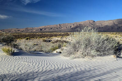 Sand Dunes | Guadalupe Mountains NP