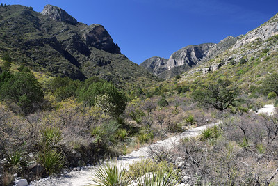 McKitrick Canyon | Guadalupe Mountains NP