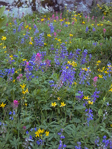 Wildflowers | Mount Rainier National Park
