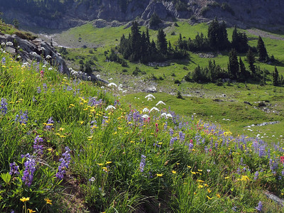 Alpine Meadow | Mount Rainier National Park