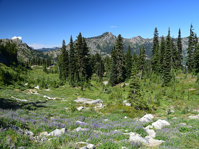 Alpine Meadow | Mount Rainier NP
