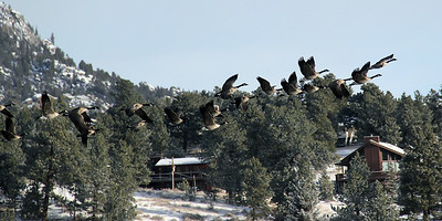 Taking Flight | Estes Park, CO