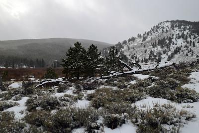 Hollowell Park Winter   Rocky Mountain NP