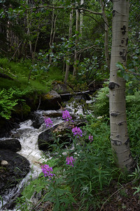 Mountain Stream   Rocky Mountain