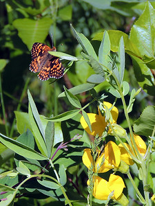 Butterfly   Rocky Mountain National Park