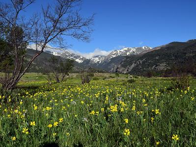 Moraine Park   Rocky Mountain National Park