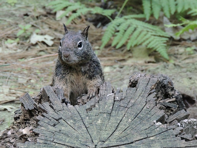 Squirrel | Yosemite National Park
