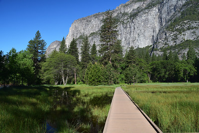 Meadow Boardwalk | Yosemite National Park