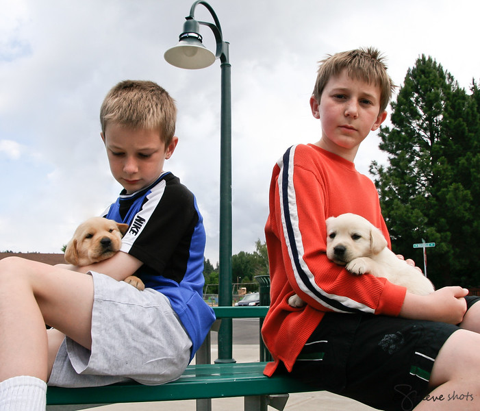 Boys%20with%20Puppies-2514-L.jpg