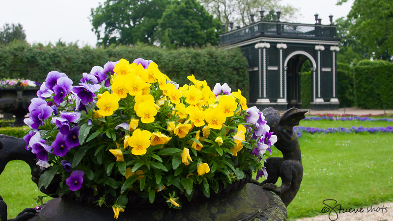Flowers of Schönbrunn Palace