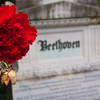 A Flower for Beethoven