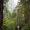 Lady Bird Johnson Grove, Redwoods National Park.