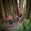 Stout Grove at Jedediah Smith Redwoods State Park.
