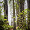 Del Norte Coast Redwoods State Park.