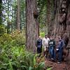Lady Bird Johnson Grove, Redwood National Park.
