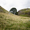 The hills surrounding Sycamore Gap. Photo by Heather.