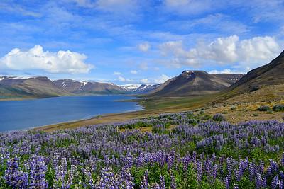 Western Fjords, Icelance