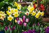 Tulips and daffodils and hyacinth on display