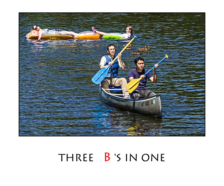 B is for Boaters and Baskers and Birds
