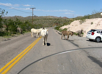 We ran into these donkeys on the way out of town.