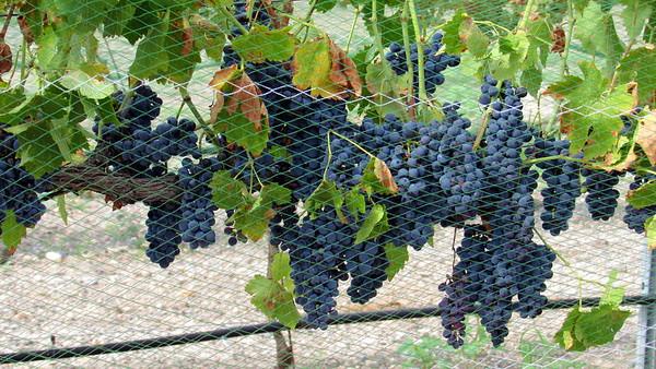 Sedona Wine Tasting Tour