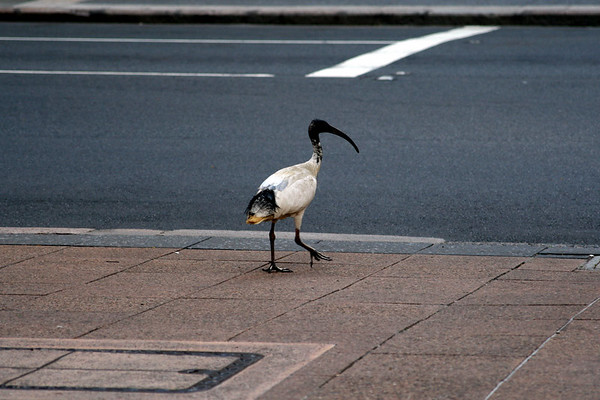 Brisbane 071.jpg