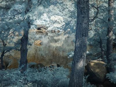 Anderson Japanese Gardens: Spring-Infrared