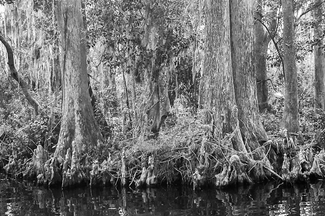 Chain of Lakes near Leesburg, FL