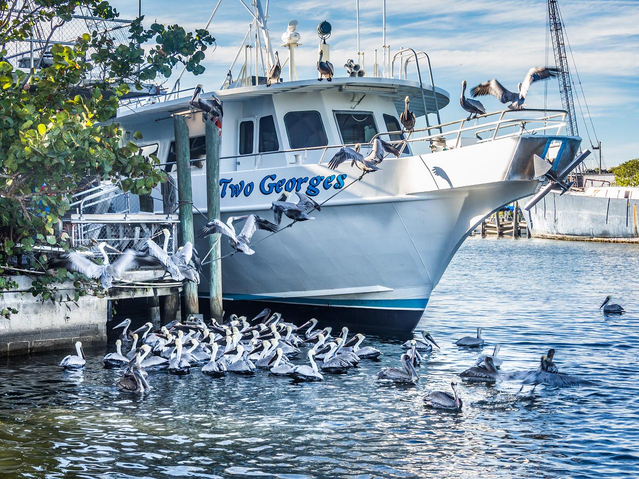 Tarpon Springs, FL      Inlet and Docks
