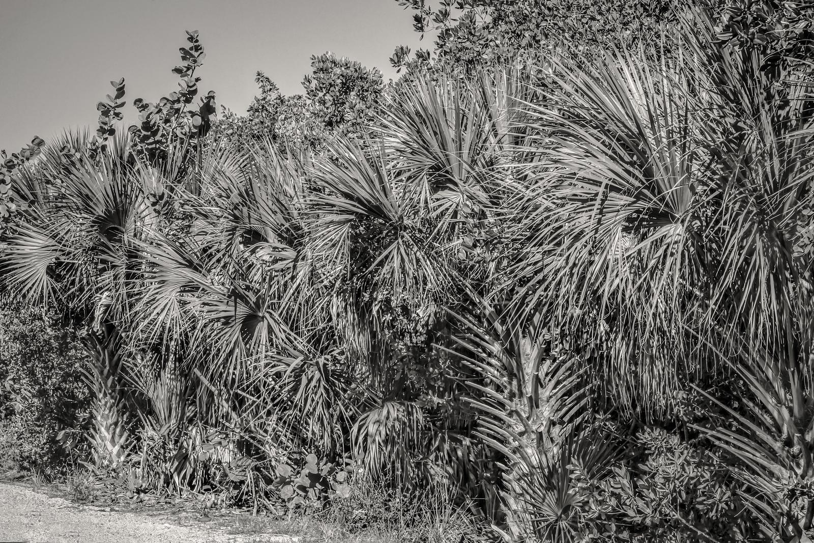 Ding Darling Wildlife Refuge, Sanibel Island, FL