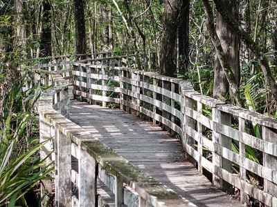Audubon's Corkscrew Swamp Sanctuary,  Naples, FL