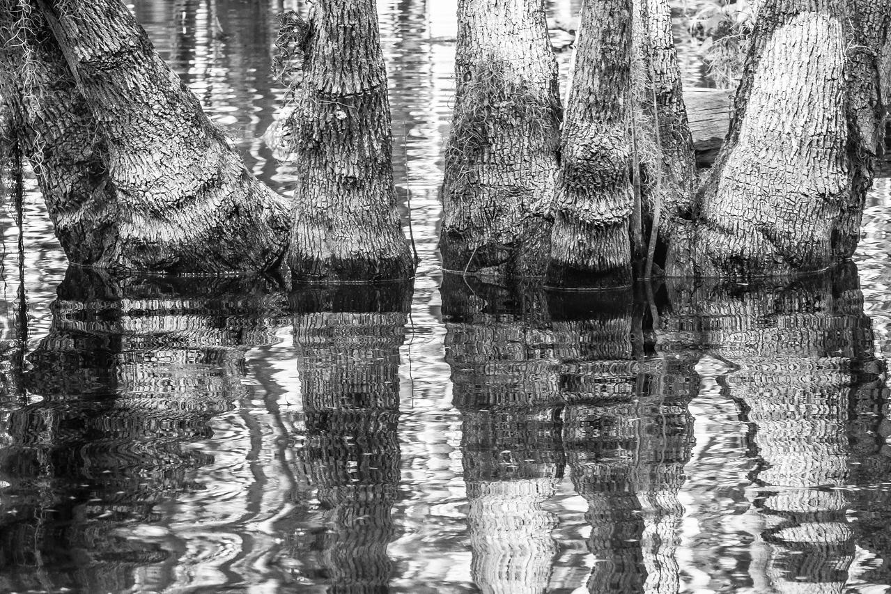 Dora Canal Connections Lake Dora with Lake Eustis, FL