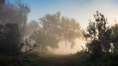 Sabal Bluff Preserve, Lake County, FL