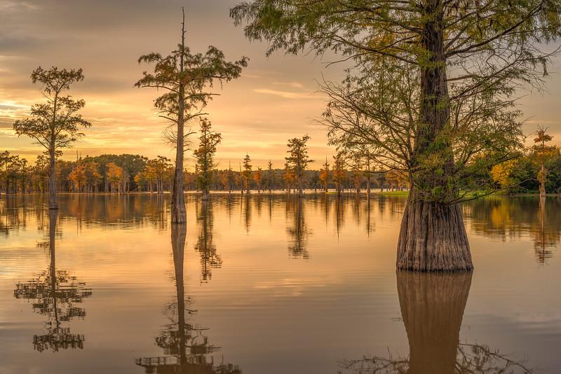 Cypress Trees In Arkabutla Lake At Sunset