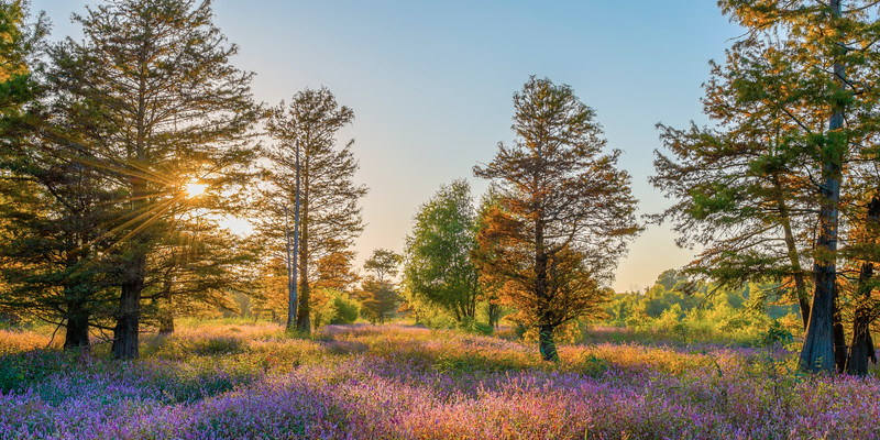 Purple Flowers In Autumn