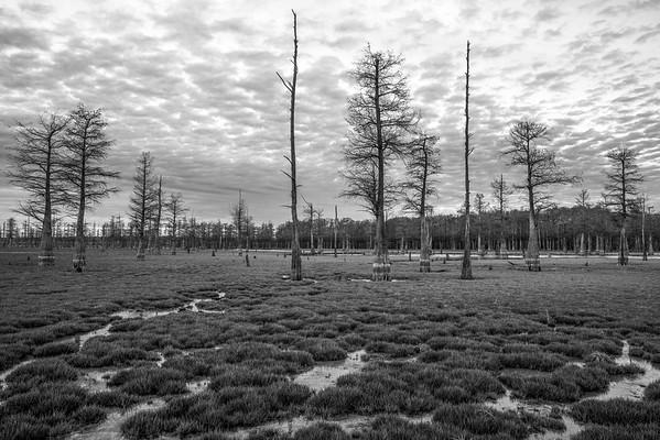 Coldwater Cypress Forest 2017