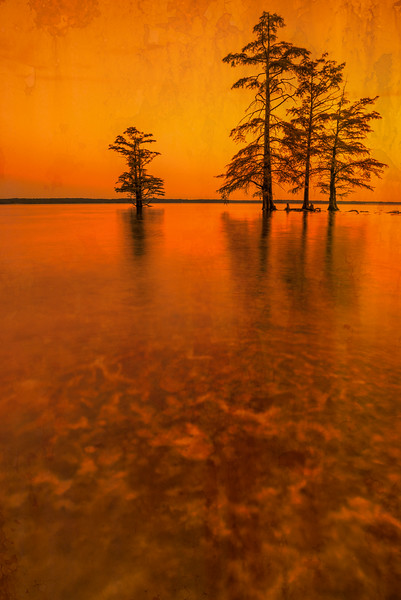 Trees In Water At Sunset