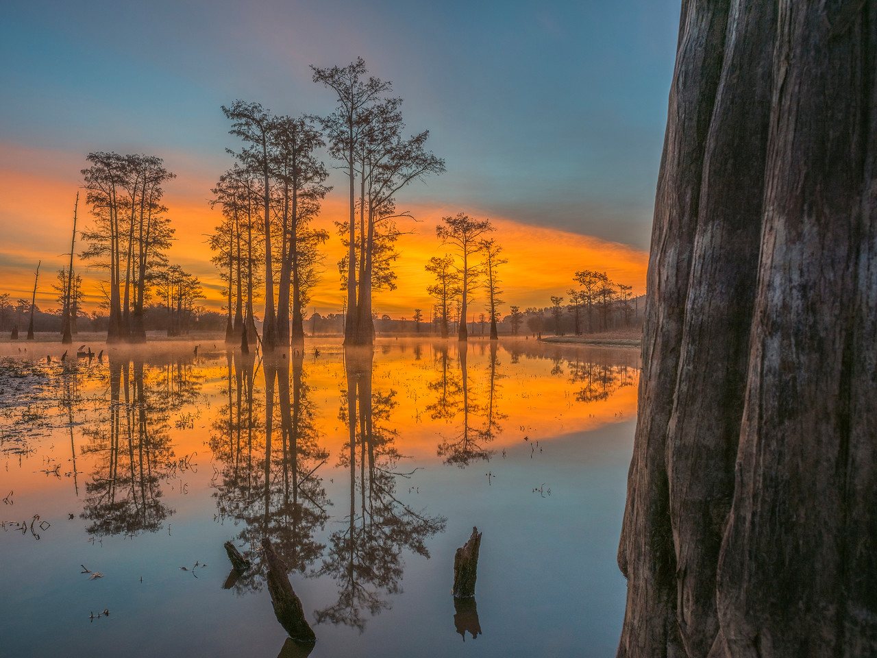 Sunrise With Cypress Trees